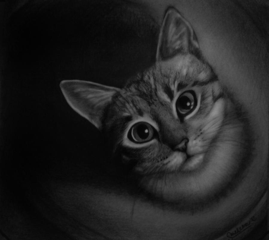 Cat by skaai100