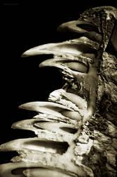 Growing Teeth by Camera-Silens