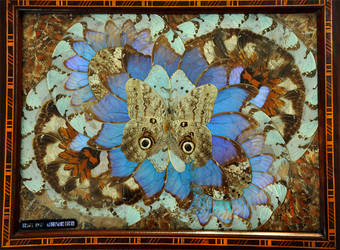 Vintage Butterfly Tray by Camera-Silens