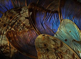 Wings II by Camera-Silens