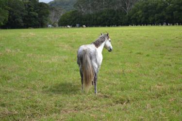 Grey Pony 2 by Tobiteus