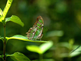 Green insect by tic226