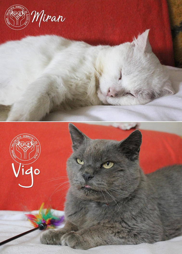 Miran and Vigo-Help save our foster cats! by Actlikenaturedoes