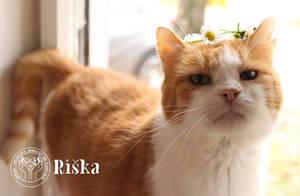 Rishka-The Daisy King by Actlikenaturedoes
