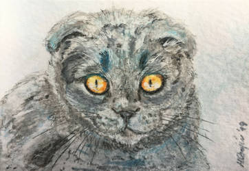 Cat portrait No.16-ACEO by Actlikenaturedoes