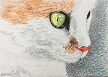 Cat portrait No.17-ACEO by Actlikenaturedoes