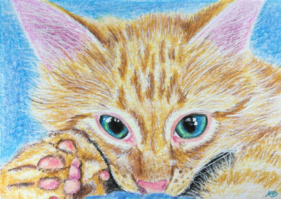 Ginger Kit-ACEO by Actlikenaturedoes