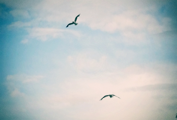 Free seagull by NailySummer