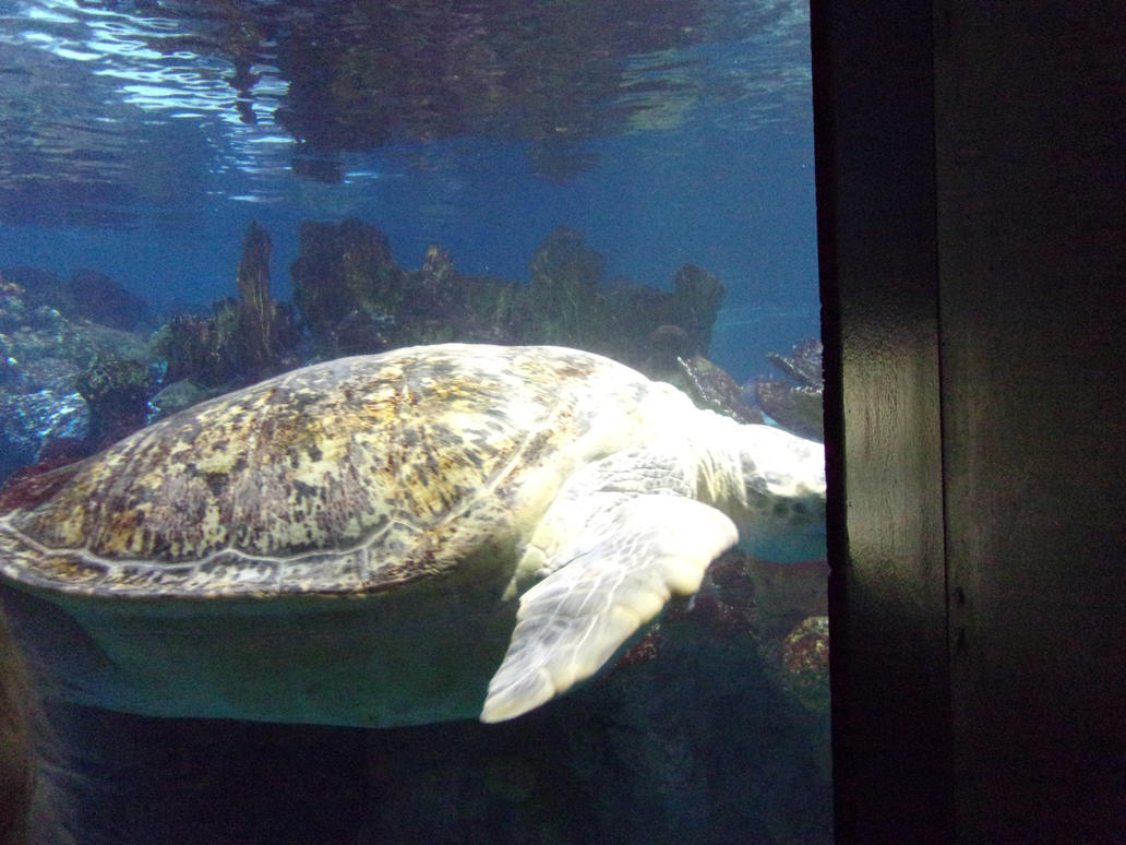 Image Result For Boston Aquarium Membership