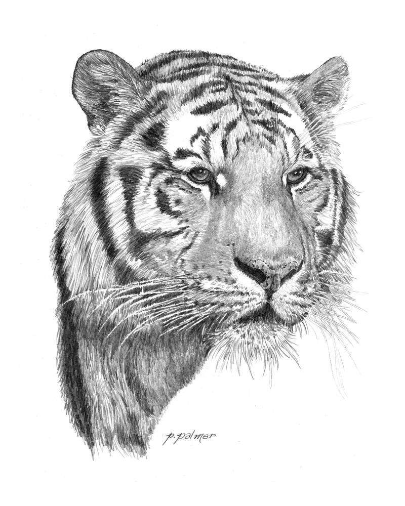 tigeraustin-animal-art on deviantart