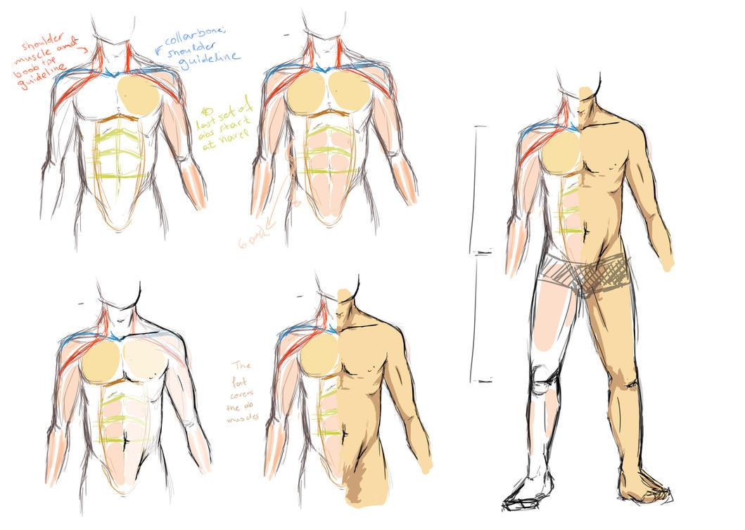 male anatomy: fit, little chub by MufMuff on DeviantArt