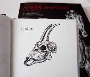 goat skull ink