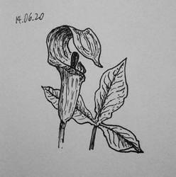 inked plant study