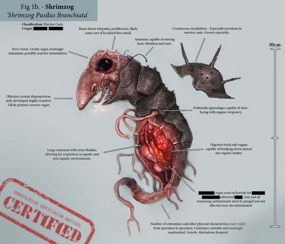 Shrimzog Anatomy by Skrumpgoblin on DeviantArt