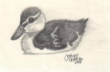 Duckling by MonaLisaSmile23