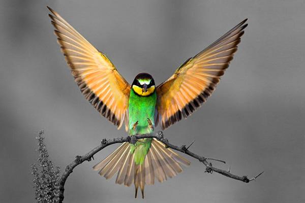 Bird by hevva1989
