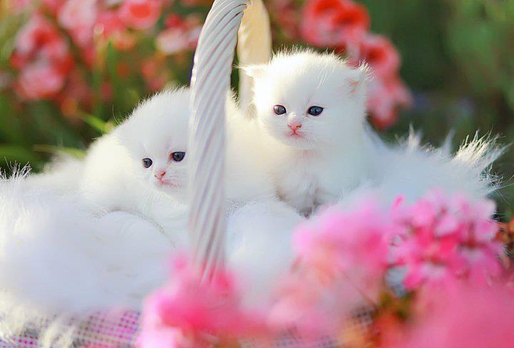 very cute kittens..... by jamaicamae012 on DeviantArt