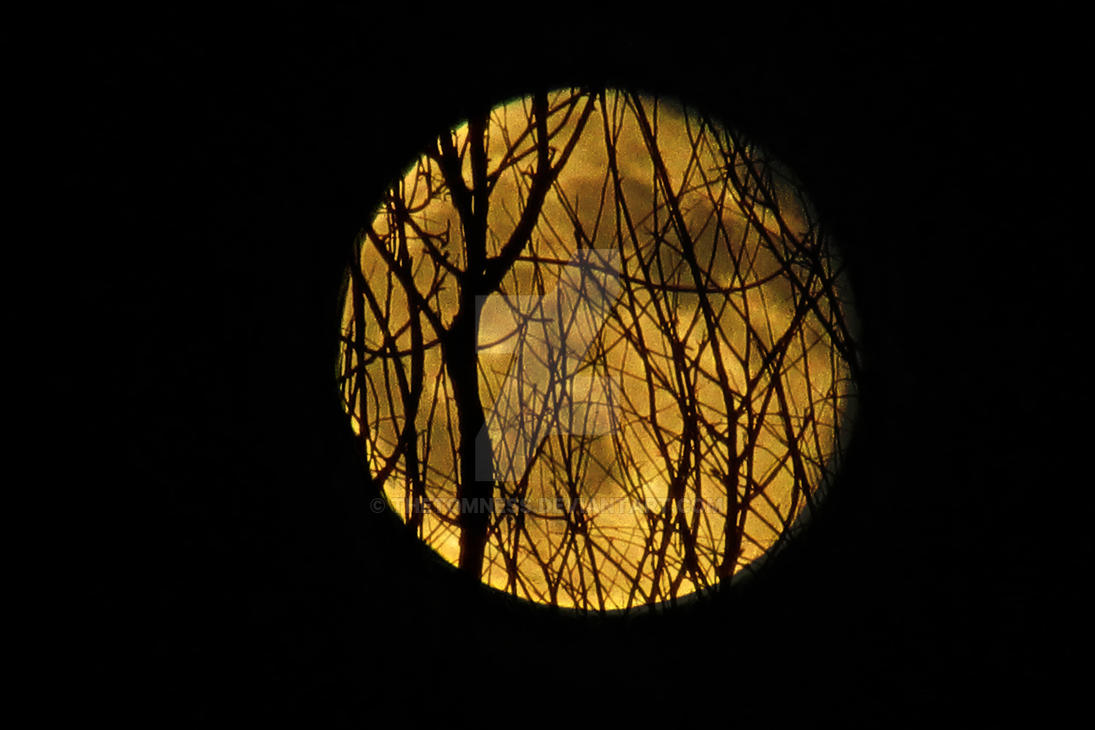 SuperMoon1 by TheTomness