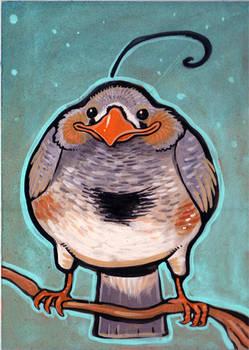 little birdie portrait