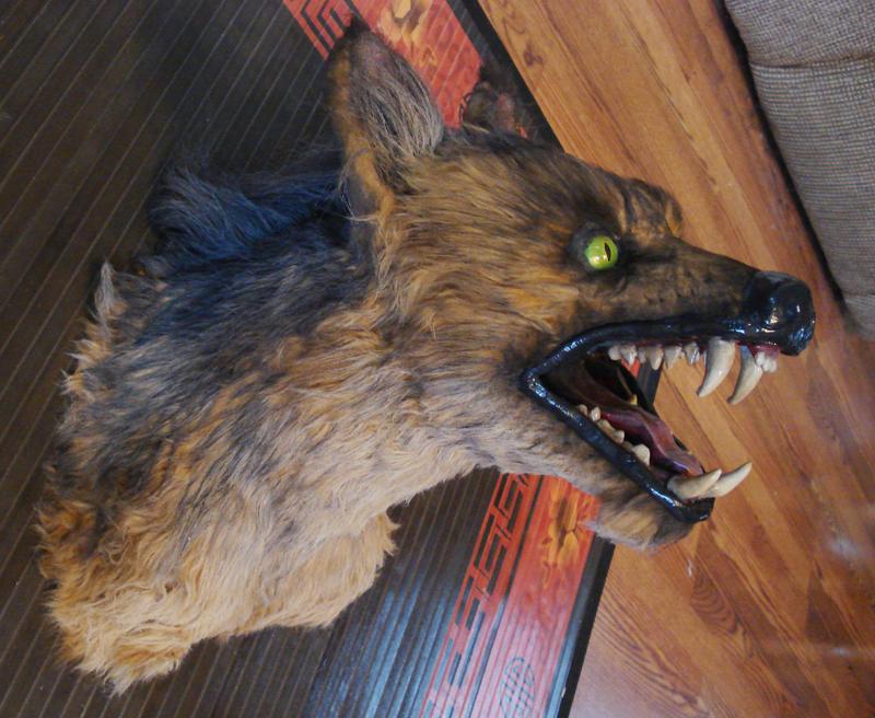 Werecoyote head done by missmonster
