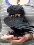 Glaw the three eyed Raven