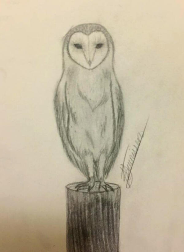 Barn Owl by S-Mari-T