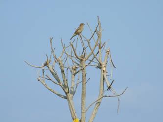 Bird on Braches by Sugary-stock