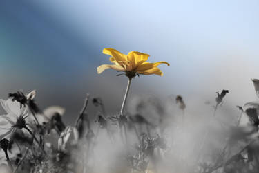 Yellow Flower by artemis09337