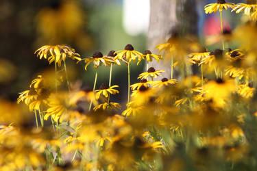 More Flowers by artemis09337