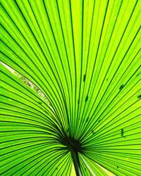 Fan Plant? by artemis09337