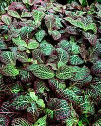 Pretty Leaves  by artemis09337