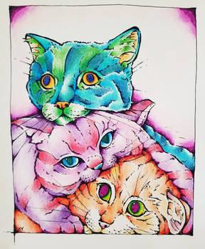 Three Strange Cats