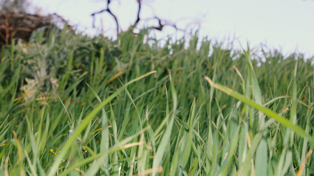 Grass in the wind by gieffe22
