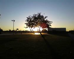 Tree Shadow by decemburr-days