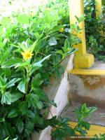 Phoenix Park 2 - Yellow fleurs by sarahcoldheart