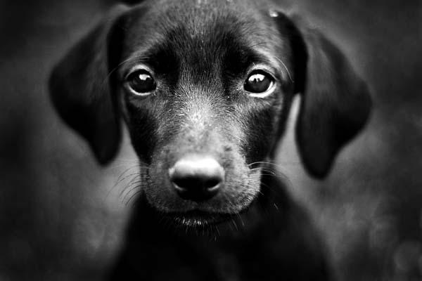 Puppy Love by saciii
