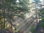 forest at 7 a.m.