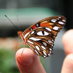 Butterfly 1 by AttempteStock