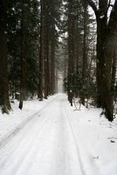 dans la neige 1