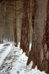 dans la neige 2 by AttempteStock