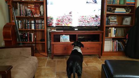 Sasha Watching Squirrel TV