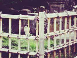 Cat of Temple