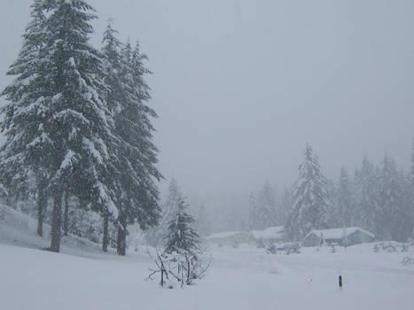 Stock~Snow covered trees~WA 2