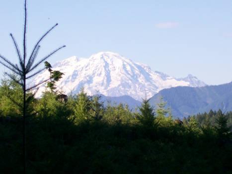 Mt St Helens 1