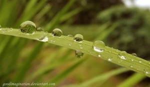 drop rain