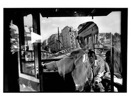 Reflection by Stephane-Burlot