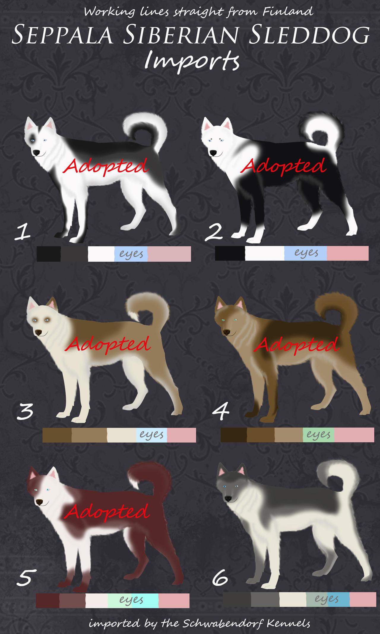 Seppala Siberian Sled Dog Kennels