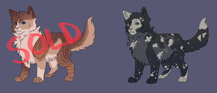 50 point cat adopts [OPEN]
