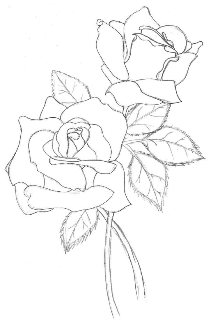 Line Drawing Of Rose Plant : Roses outline by ashton on deviantart