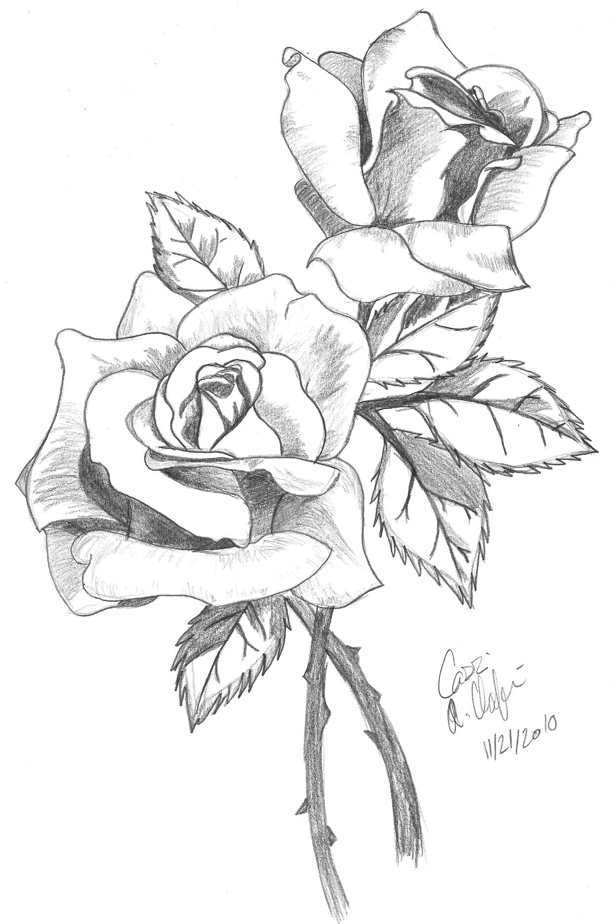 Roses Shaded By Ashton18 On Deviantart